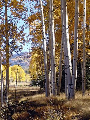 Autumn Chama New Mexico Art Print by Kurt Van Wagner