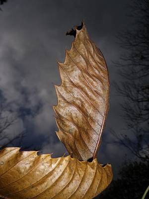 Photograph - Autumn Chestnut Leaf Boat by Richard Brookes