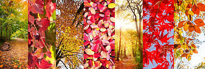 Photograph - Autumn Collage by Delphimages Photo Creations