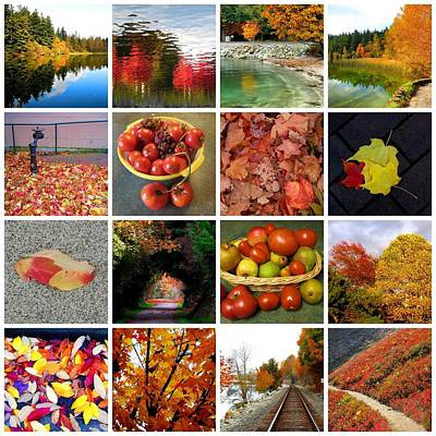 Photograph - Autumn Collage  by Karen Molenaar Terrell