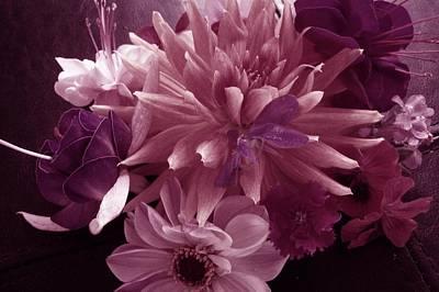 Fushia Photograph - Autumn Collection by Nancy Pauling