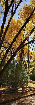 Jerry Sodorff Royalty-Free and Rights-Managed Images - Autumn Color 4528 by Jerry Sodorff