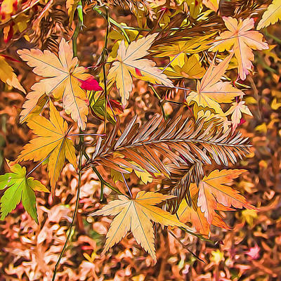 Photograph - Autumn Color And Patterns by Jay Blackburn