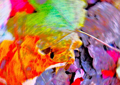 Photograph - Autumn Color Blurs 205 by George Ramos
