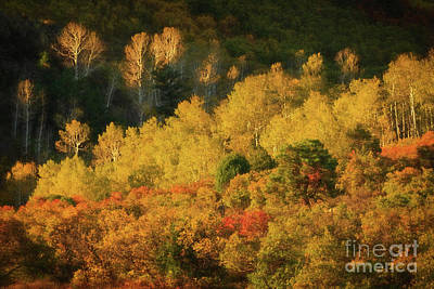 Photograph - Autumn Color by Doug Sturgess