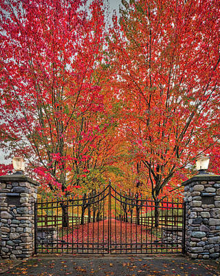 Af Vogue Rights Managed Images - Autumn Color Driveway Royalty-Free Image by Mike Penney