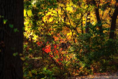 Photograph - Autumn Color by Edward Peterson