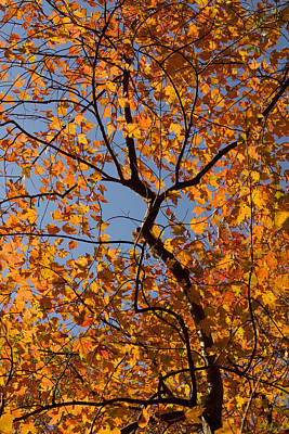 Photograph - Autumn Color In Ohio by Shawna Rowe