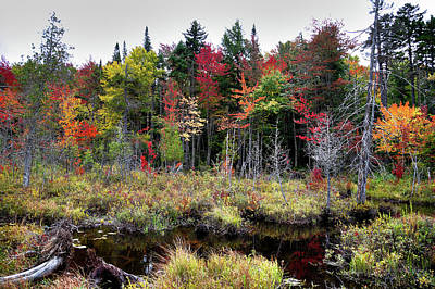 Lake Photograph - Autumn Color In The Adirondacks by David Patterson