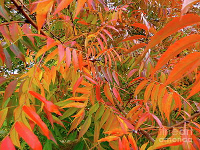 Photograph - Autumn Color by Jean Wright