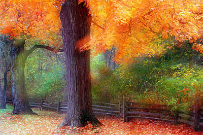 Contemplative Photograph - Autumn Color Maple Trees By Fence Line by Panoramic Images