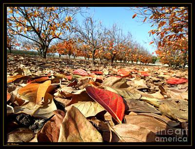Autumn Colors 04 Art Print by Arik Baltinester