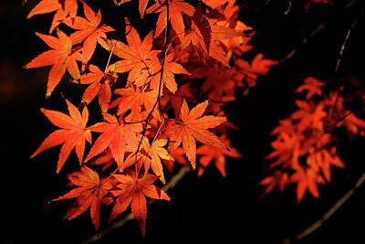 Photograph - Autumn Colors 1 by Roy Cruz