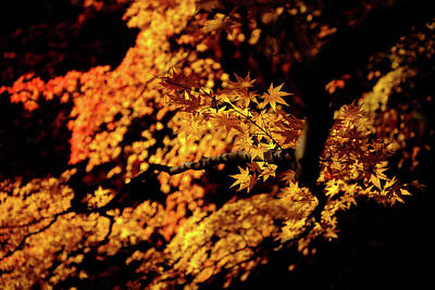 Photograph - Autumn Colors 2 by Roy Cruz