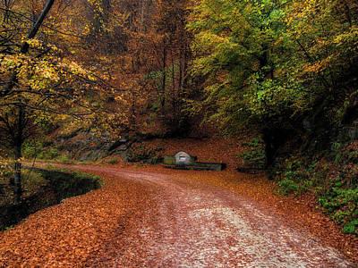 Photograph - Autumn Colors 25/10/17 by Plamen Petkov