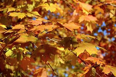 Photograph - Autumn Colors 3  by Angie Tirado