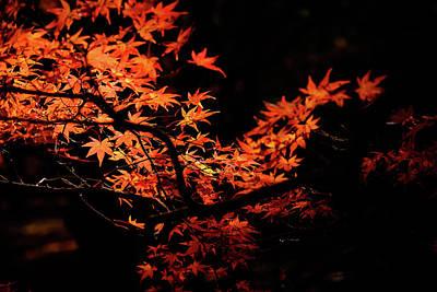 Photograph - Autumn Colors 3 by Roy Cruz