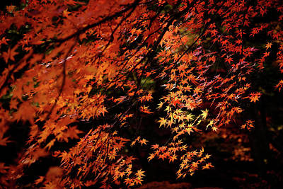 Photograph - Autumn Colors 4 by Roy Cruz