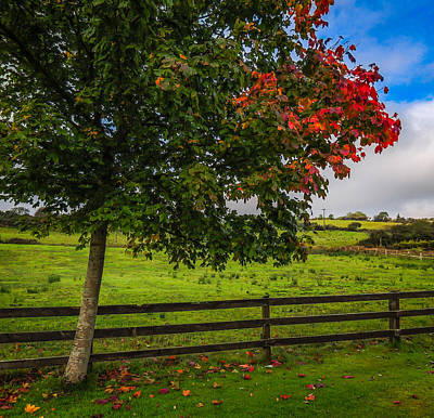 Photograph - Autumn Colors And Irish Meadow by James Truett