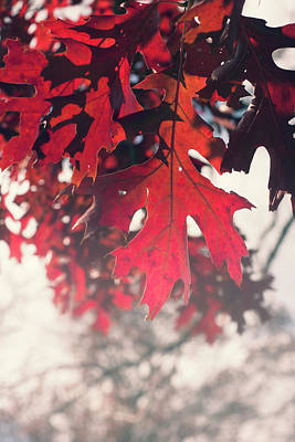 Photograph - Autumn Colors by Angela King-Jones