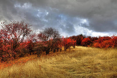 Photograph - Autumn Colors At Magpie Forest by David Patterson