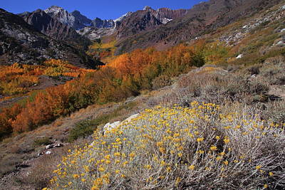 Photograph - Autumn Colors At Mcgee Creek Canyon In The Eastern Sierras by Jetson Nguyen