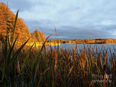 Photograph - Autumn Colors At The Lake Enajarvi by Ismo Raisanen