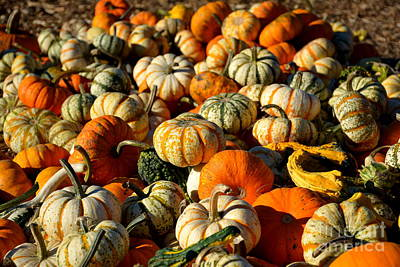 Photograph - Autumn Colors by Barbara Bardzik