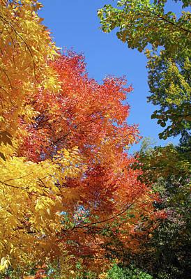 Photograph - Autumn Colors by Bonnie Follett