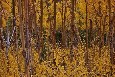 Photograph - Autumn Colors by Christopher James