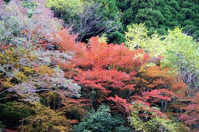 Autumn Colors Art Print by Demerval Arruda, Jr.