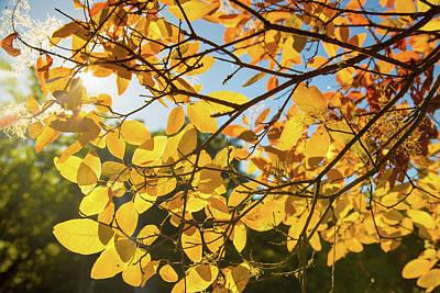 Photograph - Autumn Colors In Hoyt Arboretum by Kunal Mehra