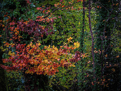 Photograph - Autumn Colors In Ireland by James Truett