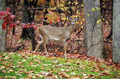Photograph - Autumn Colors by JAMART Photography