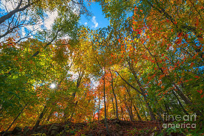 Autumn Colors  Art Print by Michael Ver Sprill