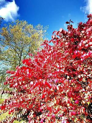 Autumn Colors Of Southern Indiana Art Print by Scott D Van Osdol