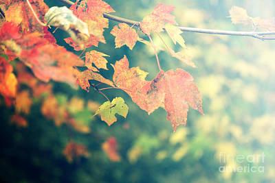Photograph - Autumn Colors by Rebecca Davis