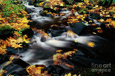 Photograph - Autumn Colors Starvation Creek  by Jim Corwin