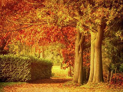 Photograph - Autumn Colors by Wim Lanclus
