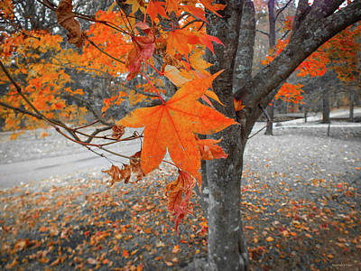 Photograph - Autumn Colorsplash  by Hannah Underhill