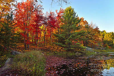 Photograph - Autumn Colour And Reflection by Joshua McCullough