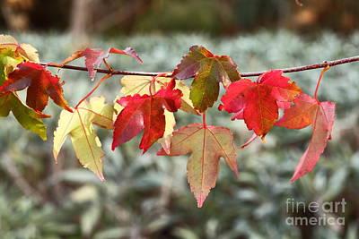 Photograph - Autumn Colour by Elaine Teague