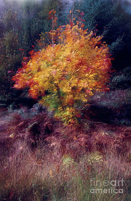 Flora And Fauna Photograph - Autumn Colour by Janet Burdon