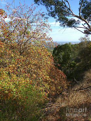 Photograph - Autumn Colours - Adelaide Hills by Phil Banks