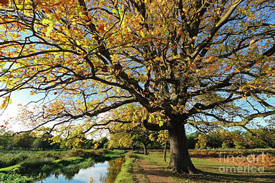 Photograph - Autumn Colours At Bushy Park London by Julia Gavin