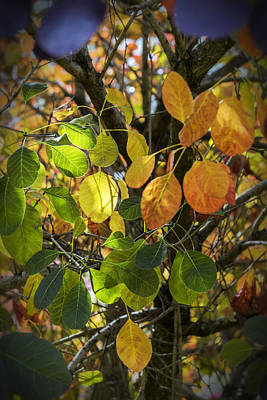 Photograph - Autumn Colours by Jeremy Lavender Photography