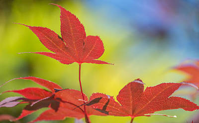 Photograph - Autumn Colours by Racheal Christian
