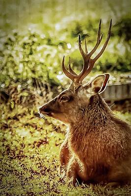 Photograph - Autumn Colours Stag by Cliff Norton