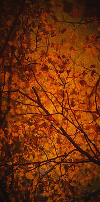 Photograph - Autumn Colours by Stuart Deacon