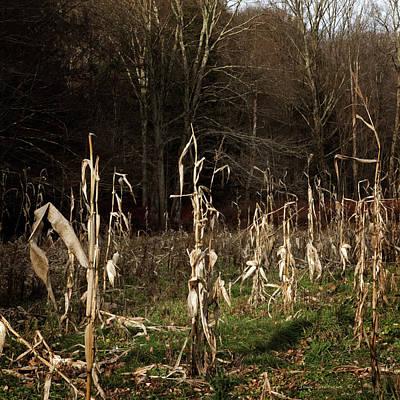 Photograph - Autumn Cornstalks by John Stephens